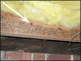 Crawl space vent, crawl space vent raleigh, crawl space insulation, crawl space dehumidifier, crawl space encapsulation, crawl space encapsulation Raleigh,